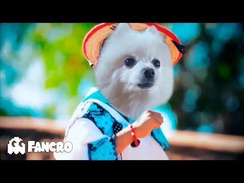 Movimiento Naranja Remix HD - Cover Animales