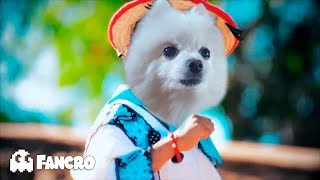 Movimiento Naranja Remix HD Cover Animales