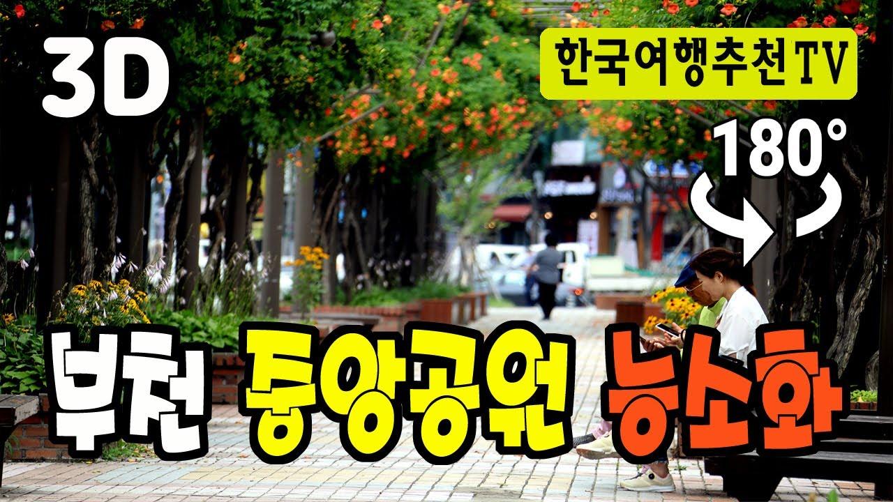 180° 3D VR 부천  중앙공원 능소화 - Bucheon Central Park Trumpet Flower in Korea