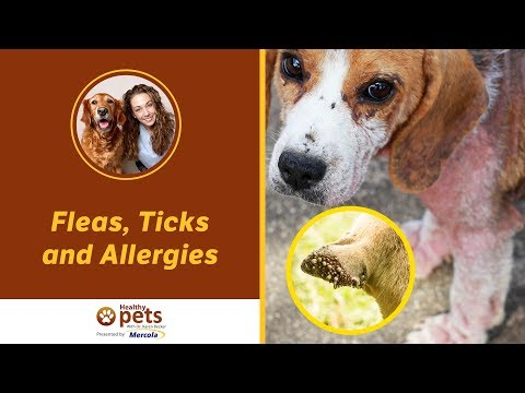 Dr. Becker's Facebook Live Presentation on Fleas, Ticks and Allergies