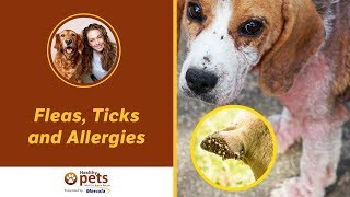 Dr. Becker's Facebook Live Presentation on Fleas, Ticks and Allergies