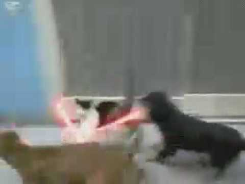 Star wars : Cat vs Dogs