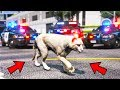 So I played as Mountain Lion... COPS WERE CALLED!! (GTA 5 Mods - Evade Gameplay)