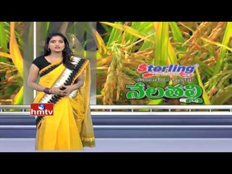 Natural Farming | Nela Talli Weekend Special - 17-04-16 | HMTV