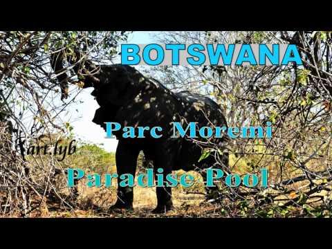 BOTSWANA Paradise Pool art.lyb
