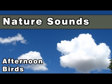 Calming AFTERNOON BIRDS Nature Sounds - 12 Hours - Sounds of Nature - Deep Relaxation