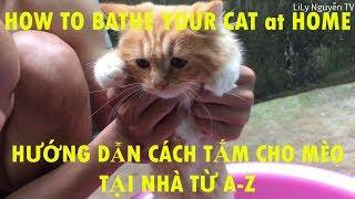 Hướng dẫn cách tắm cho Mèo tại nhà từ A-Z | How to bathe your cat at home A-Z | Long Mèo