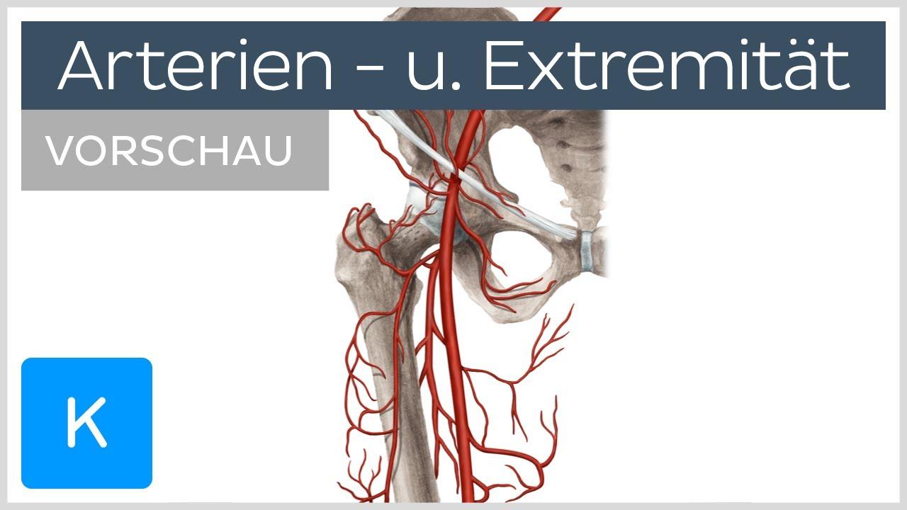 Arterien der unteren Extremität (Vorschau) |Kenhub