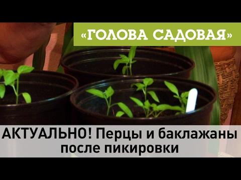 Какие баклажаны посадить -