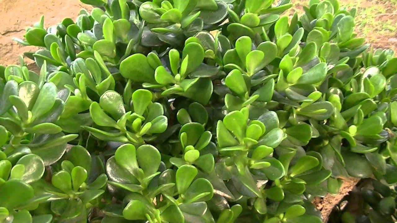 Bien-aimé Apartment Plants Feng Shui: Position your cactus to ensure good  OO86