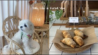 Vlog | A Day in the Life of Irene the Maltese
