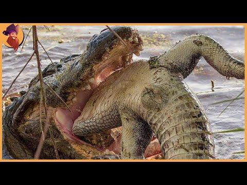 15 Scariest and Deadliest Marine Animal Battles