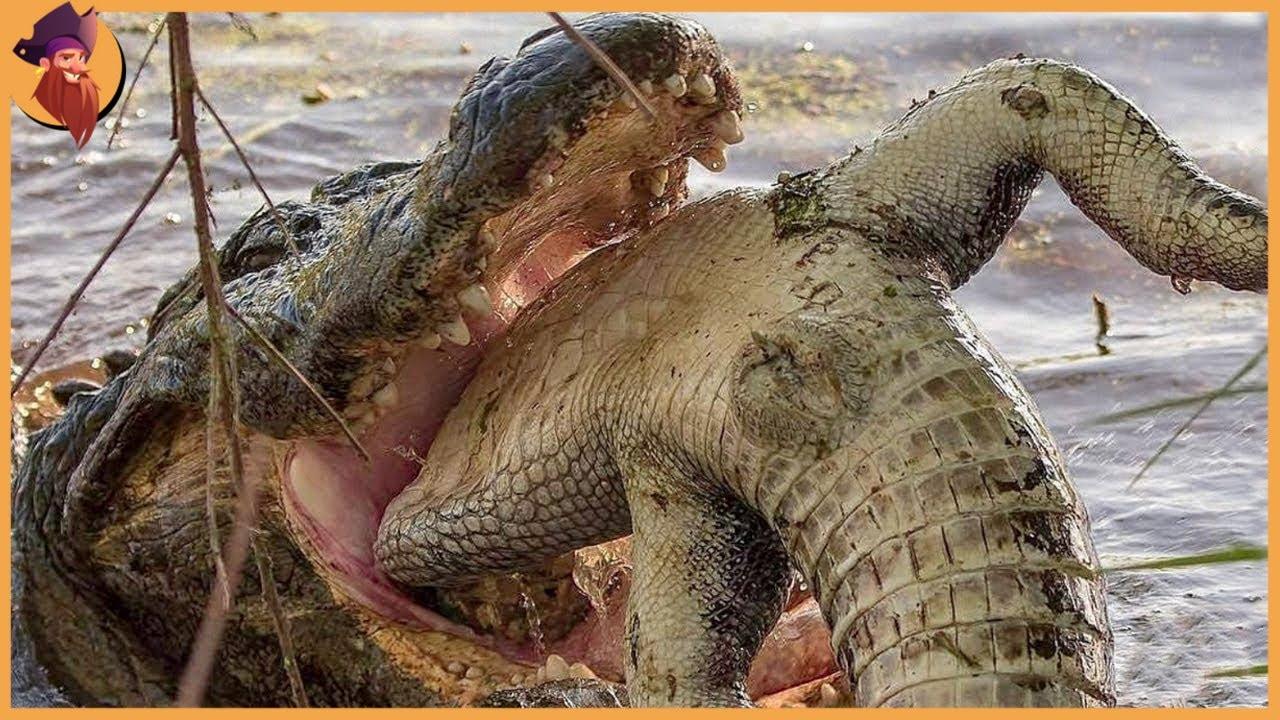 Download 15 Scariest and Deadliest Marine Animal Battles