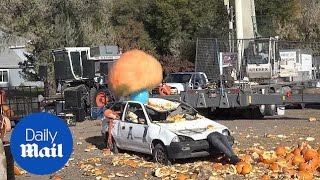 Giant pumpkin smashes furniture and a CAR!