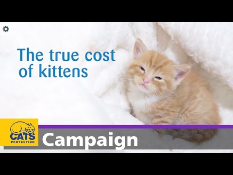 The true cost of kittens