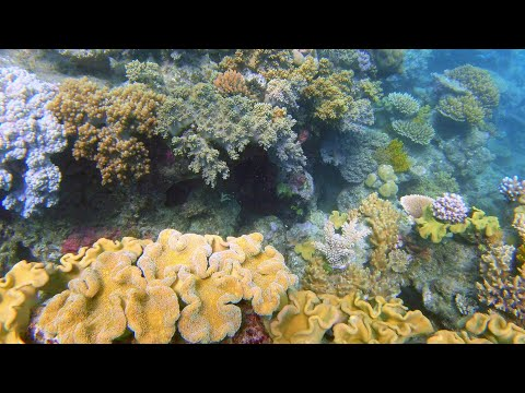Snorkelling The Great Barrier Reef: Port Douglas & Cape Tribulation 🐟🐠🐢🦈