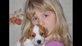 Ребенок и собака. Щенки Джек Рассел терьера и ребенок. Puppies Jack Russell Terrier and child