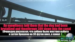 Собаку сбросили с моста очень грустное видео до слёз!😢