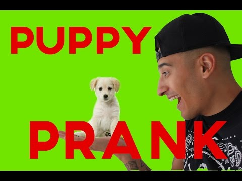 PUPPY PRANK GONE WRONG