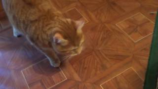 Не все коты любят валерьянку