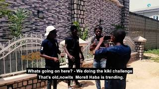 Haba Morell   bushkiddo