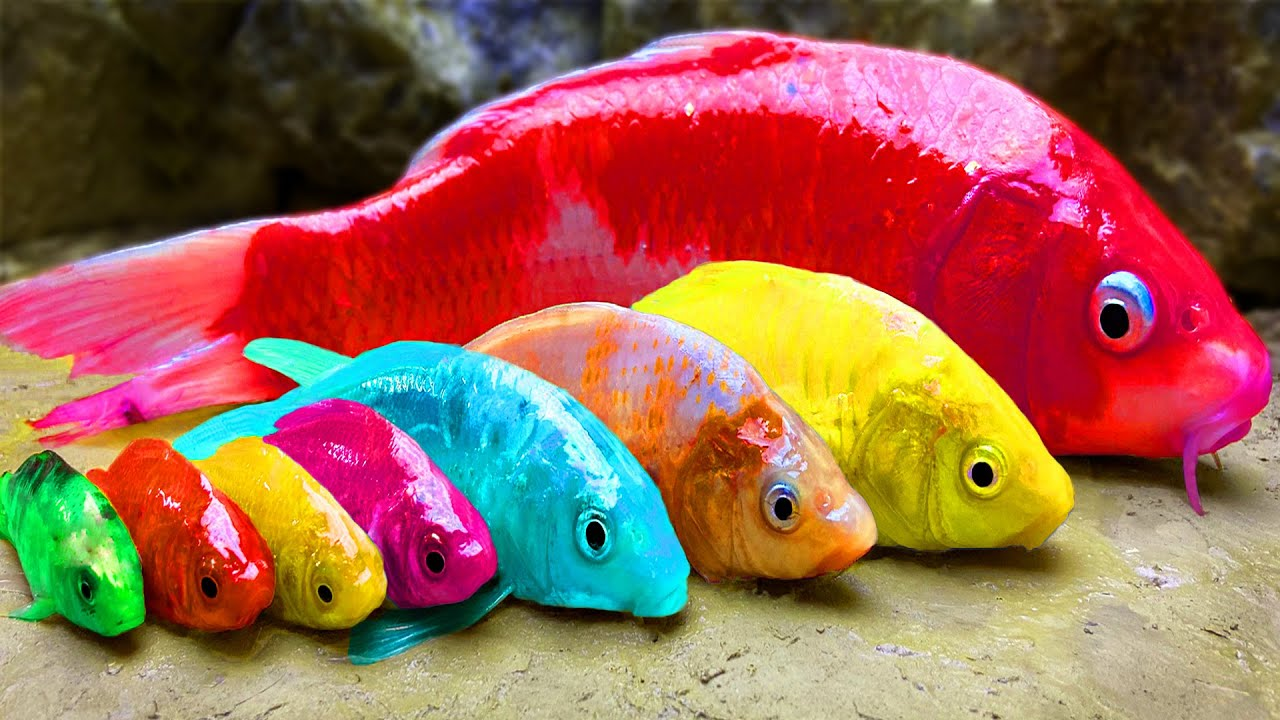 Rainbow Formation Fish | Stop Motion ASMR Experiment | Colorful Koi Fish Carp Underground Cooking