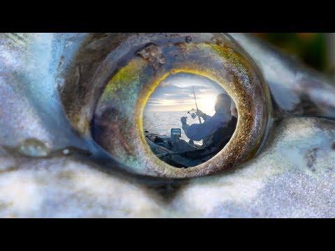 Wilderness Systems | World's Best Fishing Kayaks
