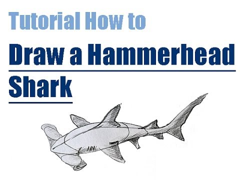Tutorial How to draw a HAMMERHEAD SHARK step by step ...