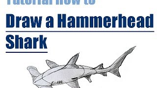 Tutorial How to draw a HAMMERHEAD SHARK step by step // Wie man einen Hammerhai zeichnet