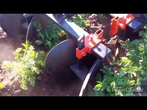 Окучивание картофеля дисковыми окучниками тяжелым мотоблоком. Второе окучивание.