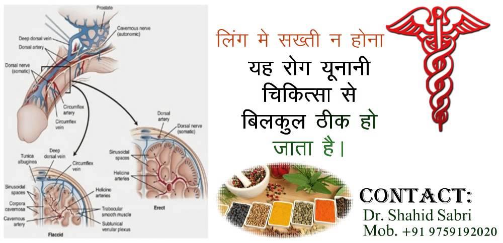 penis translate in hindi