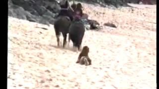 лошадь отправил собаку в нокаут