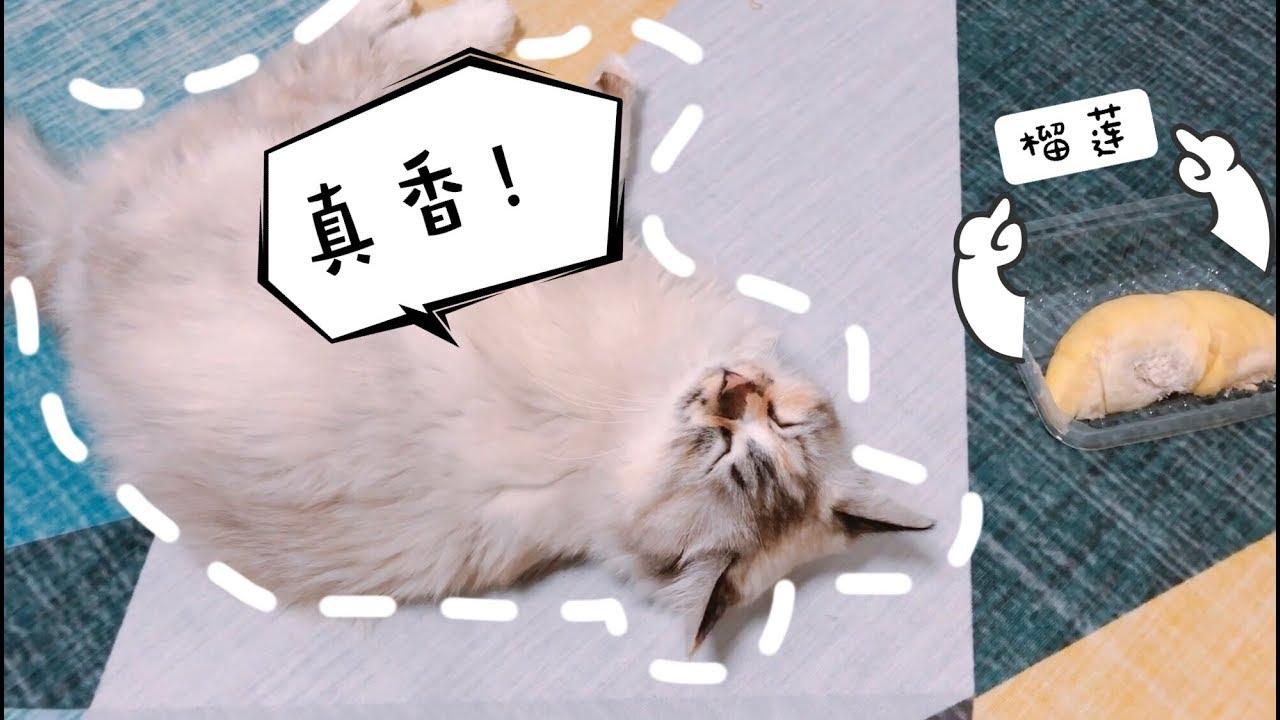 猫咪不停偷袭猫主人背后到底隐藏什么秘密,发现真相的我,真香