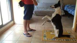 hx4 ensea a tu perro a saludar