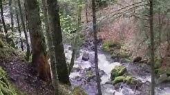 Sur la trace de l'Ours brun dans les Pyrénées Centrales en Comminges