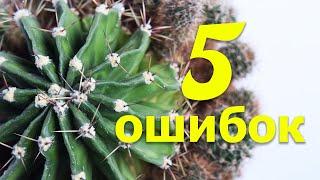 5 РАСПРОСТРАНЕННЫХ ОШИБОК В УХОДЕ ЗА КАКТУСАМИ
