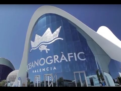 Valencia's Oceanografic - Europe's Largest Aquarium! (A Behind the Scenes look at)