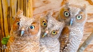These Owls Are Definitely Judging You