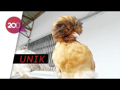 95+ Gambar Ayam Dan Namanya Terbaik