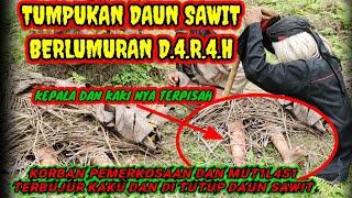 PENEMUAN M.4.Y.4.T MUTILASI BERTUMPUK DAUN SAWIT BERLUMURAN D.4.R.4.H!!!!