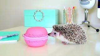 Hedgehog Adventures ~ Hedgehog Escape & Giant Macaron Thumbnail