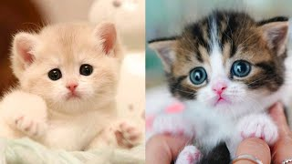 Baby Cat - Cute and Funny Cat Videos Compilation #1 | Funny Animals