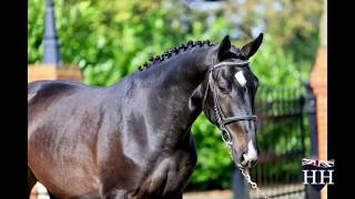 Gambar cover Kannan Stallion Born 2016