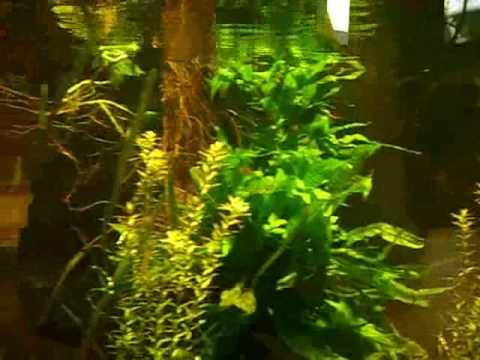 Two Rainbowfish Tanks / Regenbogenfischbecken @ Tierpark Bochum [15/23]
