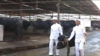 Maratha Konkan Dairy Farm