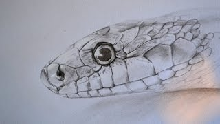 snake drawing draw drawings pencil 3d snakes tattoo arts animal animals clip library clipart google