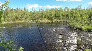 В ПОИСКАХ КУМЖИ И ФОРЕЛИ / In SEARCH of TROUT AND TROUT