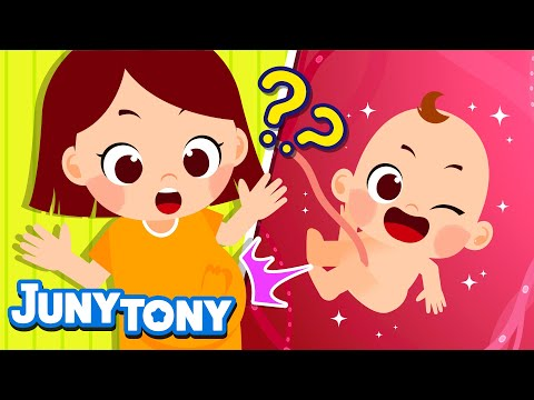 How Is A Baby Born? | Body Song For Kids | Preschool Song | KizCastle