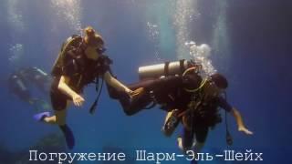 Подводный мир Красного моря. Дайвинг в Шарм-Эль-Шейхе. Египет