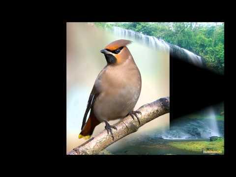 Фото-Фильм Природа